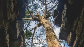Bäume als Individuen: Jeder Baum hat sein eigenes Lied