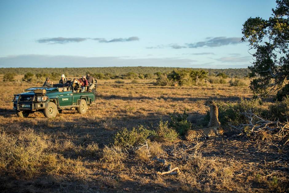 Maximal drei Jeeps dürfen sich einer Tiergruppe nähern.