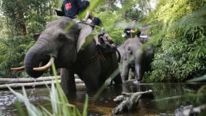 Die Vier von der Elefantenpolizei