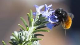 Ein Drittel weniger Insekten als vor zehn Jahren