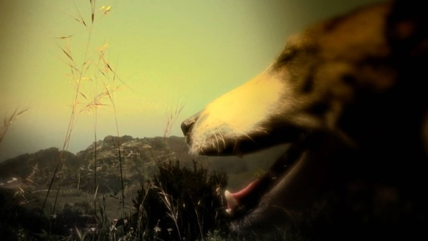 Was der Hund vom Adler lernt