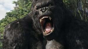 Der berühmte Riesengorilla ist zurück