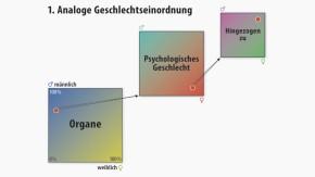 Infografik / Geschlechterzuschreibungen / Analoge Geschlechtseinordnung