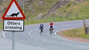 Von Menschen, Schafen und Shetland-Ponys