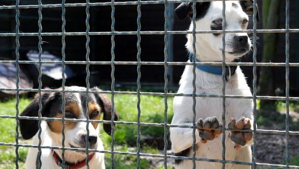 Deutsche Tierheime in Geldnot