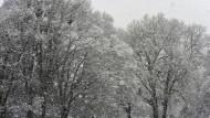 """In Friedrich Anis Roman """"Der namenlose Tag"""" ist nicht nur der Name einer Figur winterlich. Am besten liest man den Krimi im Hochsommer."""