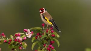 Sind Vögel musikalisch?
