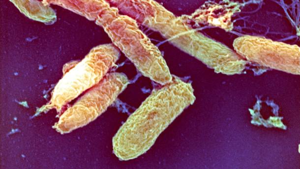 Warum eine verschwundene Krankheit wieder auftauchen kann