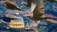 Stare interessiert der Petersdom in Rom wenig. Ihr Ziel ist das Vogelparadies.