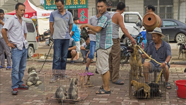 Gehört Hundeessen zur Kultur?