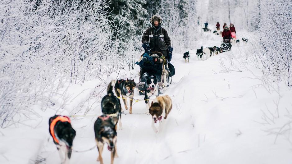 Auf den Huskie gekommen: Das Schlittenteam in der Weite Lapplands.