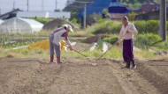 Tschernobyl, Fukushima - Leben im Risikogebiet