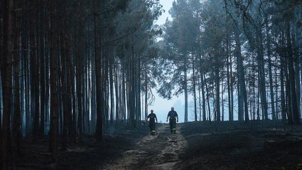 Die Zukunft des Waldes steht auf dem Spiel