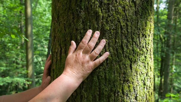 Sei nicht die Axt im Walde