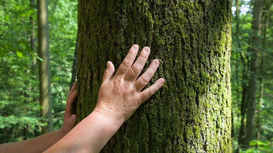 Man muss ja nicht gleich den ganzen Baum umarmen, anfassen reicht.