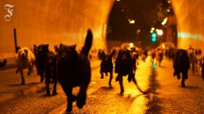 """Video-Filmkritik """"Underdog"""": Der Promenadenhitchcock"""