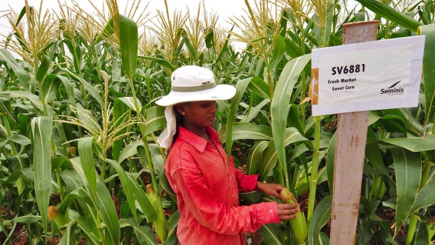 Monsanto verlangt bis zu 7 Milliarden Dollar mehr von Bayer