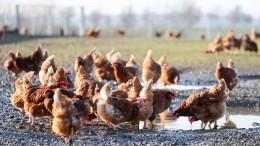 Wie viel Geld ist Verbrauchern der Tierschutz wert?