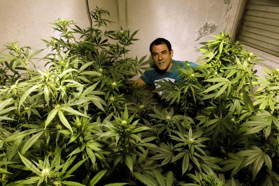 marihuana aktien dope f rs depot aktien faz. Black Bedroom Furniture Sets. Home Design Ideas
