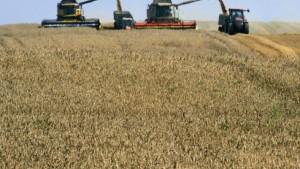Nachfrage nach Terminkontrakten größer als nach Getreide
