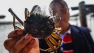 Die haarige Krabben-Angelegenheit