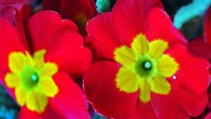 Farbenfrohe Blütenzwerge im Park Belvedere