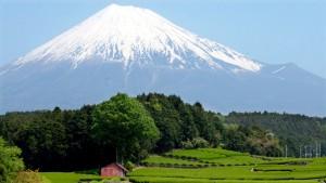 Japan kämpft um Afrika