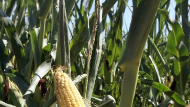 Getreide ist deutlich teurer geworden