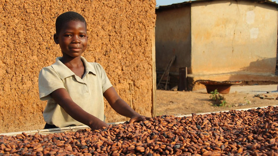 Kinder, wie dieses neunjährige Mädchen an der Elfenbeinküste im Jahr 2017, arbeiten schwer bei der Kakaoernte und Trocknung