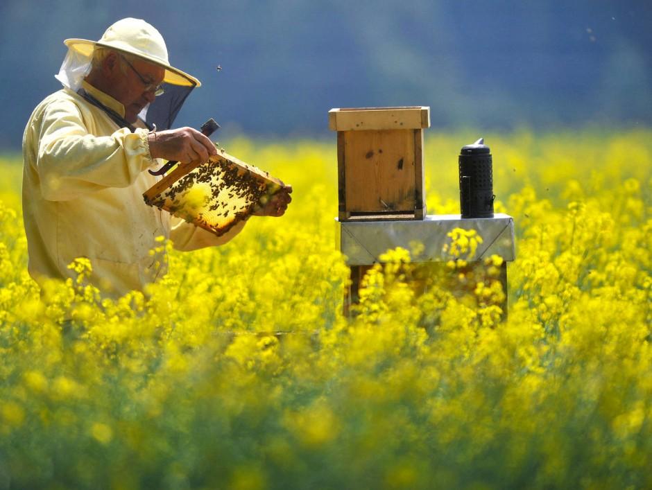 Honigliebhaber können ihre Leibspeise direkt fördern.
