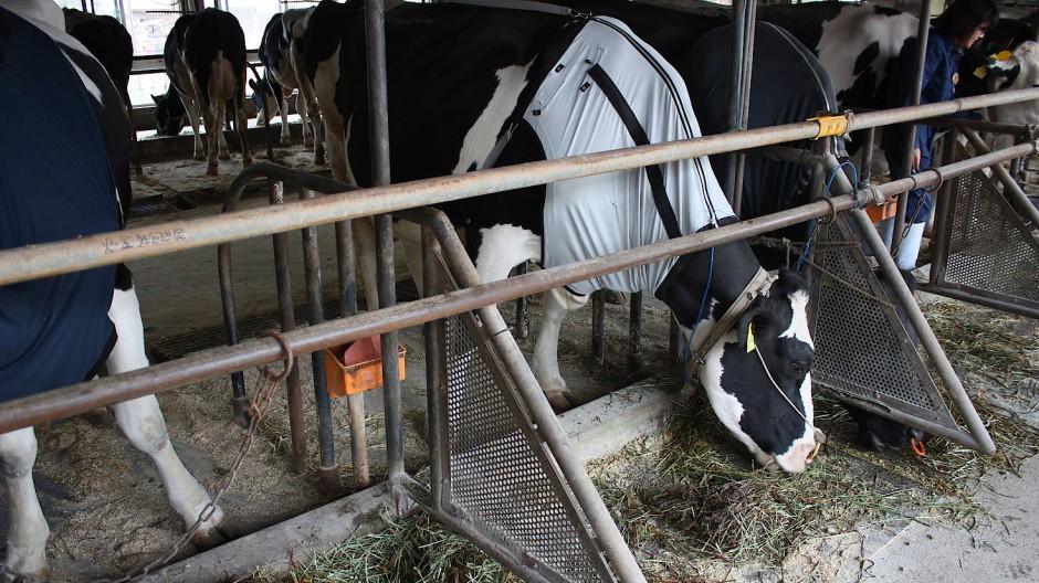 Modische Funktionskleidung für Kühe