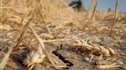 Getreide wird nächstes Jahr teurer