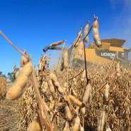 Soja-Ernte in Nebraska/Vereinigte Staaten