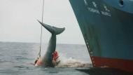 Rückschlag für Japans Walfangpläne
