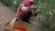 Chinas Ackerland ist verseucht