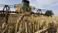 Ackerbau und Viehzucht sind gefragt