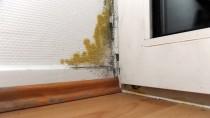 Einen Schimmelbefall sollten Mieter und Eigentümer möglichst schnell beseitigen.