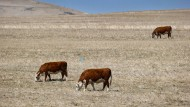 Südafrika hat nicht nur mit einer Dürre zu kämpfen.