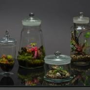 Pflanzen im Glas liegen im Trend.
