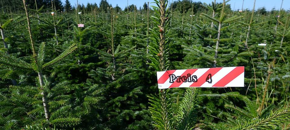 Weihnachtsbaum Der Guten Wünsche.Wo Kaufe Ich Am Besten Meinen Weihnachtsbaum