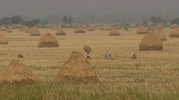 Sorge über mögliche Preisexplosion bei Reis