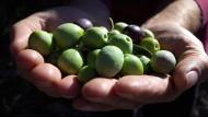 Der Preis für Olivenöl ist im Jahr 2015 um fast 20 Prozent angestiegen.
