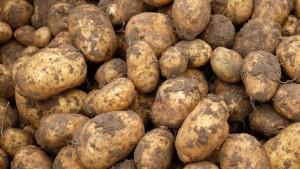 Rin in die Kartoffeln