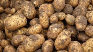 Das Kartoffelkombinat aus München betreibt solidarische Landwirtschaft.