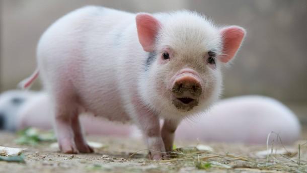 Sex, Gestank und wilde Schweine