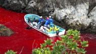 Zoos verzichten auf Delfine aus umstrittener Jagd