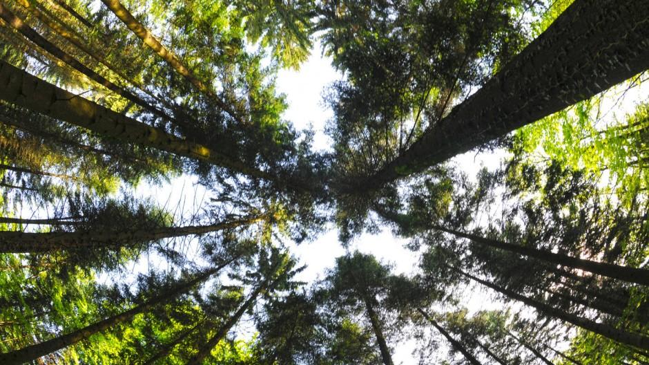 Das Konzept der Nachhaltigkeit hat sich stark verändert: Heute dürfen die Wälder ganz naturnah wachsen