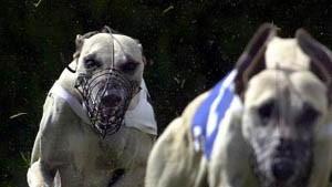 Dow Dogs haben Konkurrenz bekommen