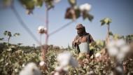 Baumwollanbau in Afghanistan
