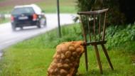 Bauern fahren Rekord-Kartoffelernte ein
